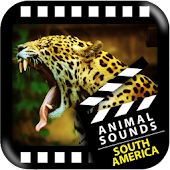Best South American Animals