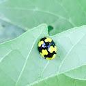 Fungus eating ladybird