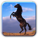 Amazing Horses Pictures logo