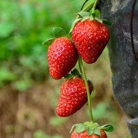 _DSC2819 by Richard Idea - Nature Up Close Gardens & Produce (  )