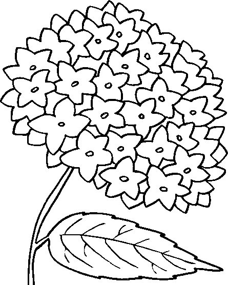 Flowers Coloring - screenshot