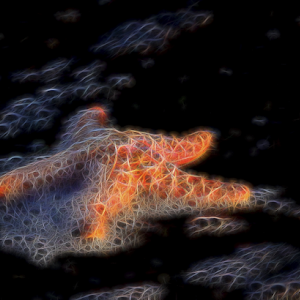 Starfish Glow.jpg