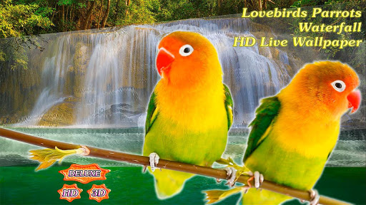 Lovebirds Parrots Waterfall app (apk) free download for Android/PC/Windows screenshot