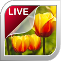 Tulip Live Wallpaper icon