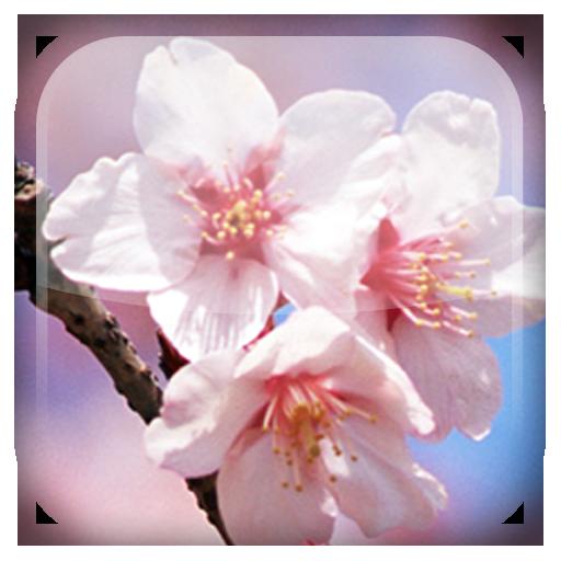 櫻花動態桌布 LOGO-APP點子