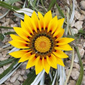 Here's lookin' atcha by Frank Gualtieri - Flowers Flower Gardens (  )