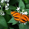 Flowering plant & butterfly