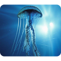Beautiful Jellyfish Wallpaper icon