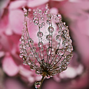 Prelude To Joy by Marija Jilek - Nature Up Close Natural Waterdrops ( plant, water, nature, herbs, joy, prelude, waterdrops, the mood factory, mood, lighting, sassy, pink, colored, colorful, scenic, artificial, lights, scents, senses, hot pink, confident, fun, mood factory  )