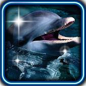 Dolphins Fishes live wallpaper