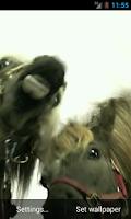 Screenshot of Horses lick screen Wallpaper