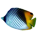 FishFinder - worldwide Fish ID icon