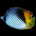 FishFinder - worldwide Fish ID icon