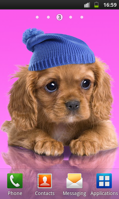 Sweet dog, puppy, dress up- screenshot