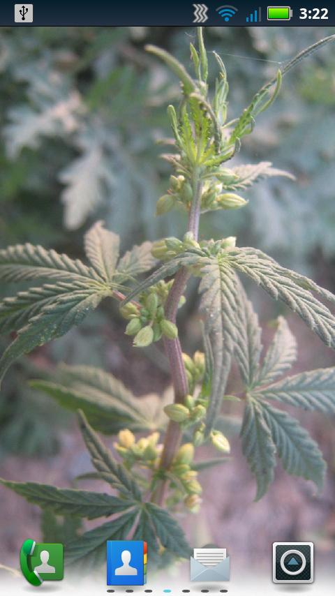 Indica Cannabis Live Wallpaper - screenshot