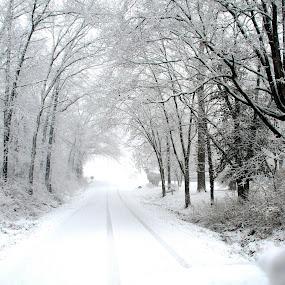 palm sunday snow by Jody Jedlicka - Landscapes Weather ( winter, fresh, snow, enchanted, light )