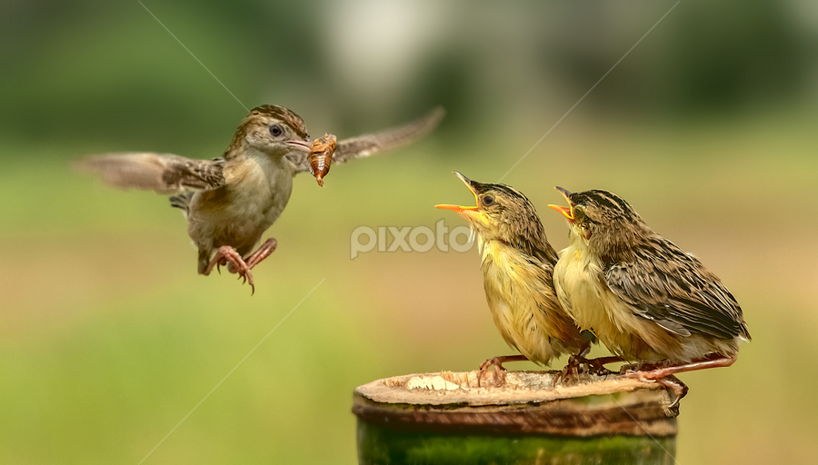 Catch on by Husada Loy - Animals Birds