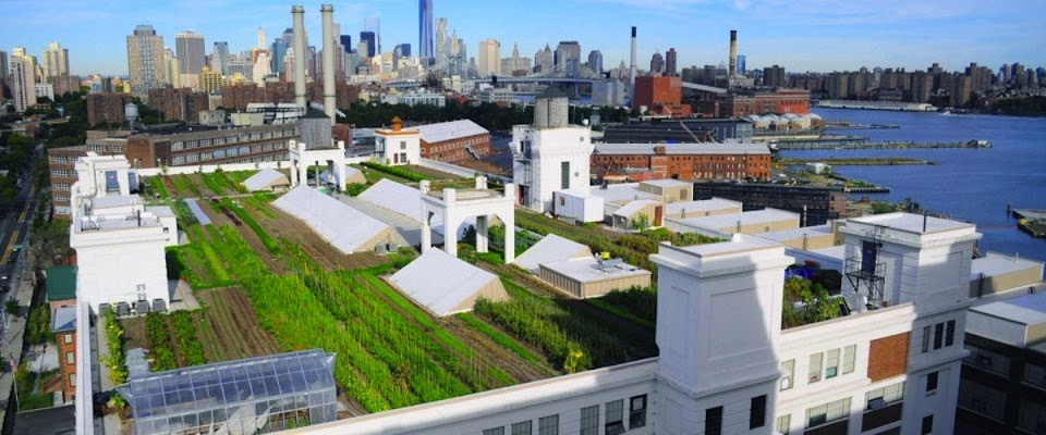 The love of rooftop gardens began in the ancient city of Babylon.