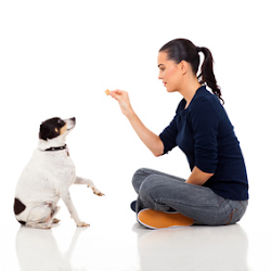 Basic commands in training your dog
