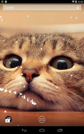Q Cat ライブ壁紙