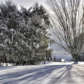 Snow Shadows by Sue Green - Landscapes Weather ( winter, seasons, snow, white,  )