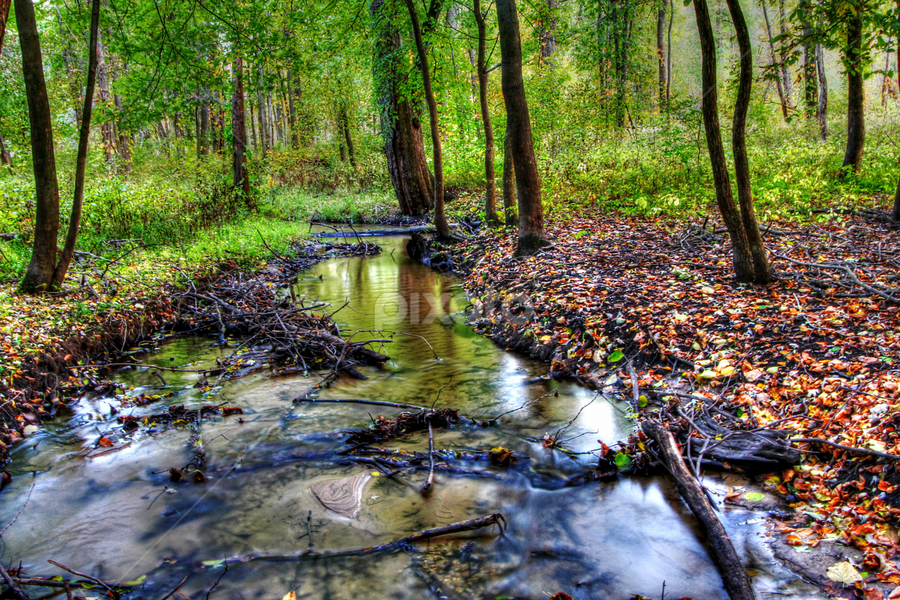 by Dipali S - Landscapes Forests ( hdr, park )