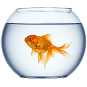 Golden FishBowl Live Wallpaper