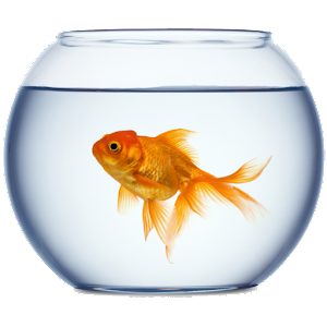 Golden fish bowl wallpaper for Best fish for fish bowl