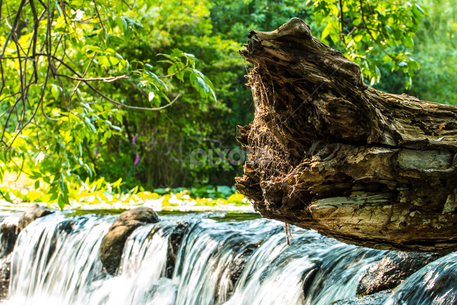 Over the Fall by Michael Stefanich Jr. - Nature Up Close Trees & Bushes ( #waterfall, #tree )
