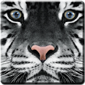 White Tiger Live Wallpaper logo