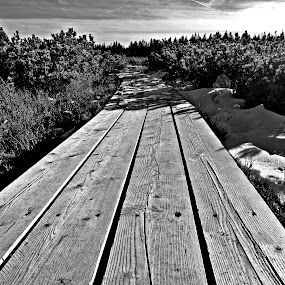 Path by Matevz Skerget - Black & White Objects & Still Life ( moorland, path, pine )
