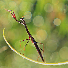 by Indah Nababan - Animals Insects & Spiders