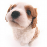 Cute Dog Big head photobook icon