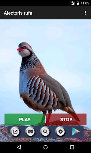 玩免費教育APP|下載プロ鳥 app不用錢|硬是要APP