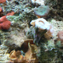 Trumpet, Mushroom, and Cup Coral