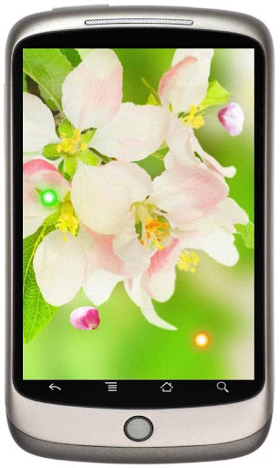 Spring Cherry Sakura LWP