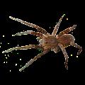 App Spider Tarantula Sticker apk for kindle fire