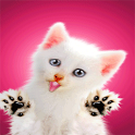 Sweet Cat Licking Screen LWP icon