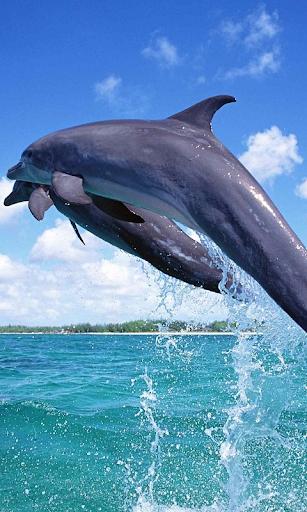 Delfines Live Wallpaper