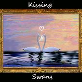 Kissing Love Swans -  Live