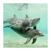 3D cute dolphin live wallpaper