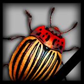 Warrior Bugs (Free)