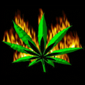 Flame Weed Live Wallpaper icon