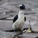 Hornbill - Von der Decken's Hornbill