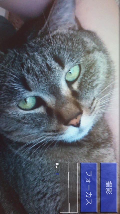 beeCam EasyShot- screenshot