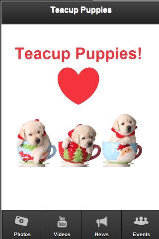Teacup Puppies - screenshot