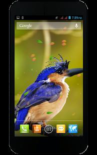 koi pond live wallpaper full version free download