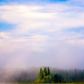 Lonely Island by Charles Adam - Landscapes Waterscapes ( calm, clouds, cool, water, fog, serene, dew, trees, forest, lake, morning )
