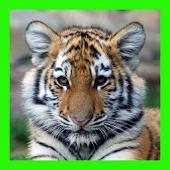 لغز الصورة البرية النمر لعبة