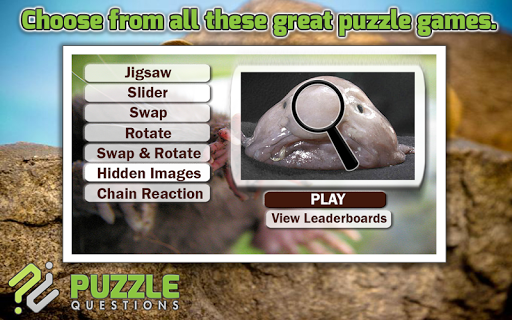 Free Weird Animals Puzzle Game